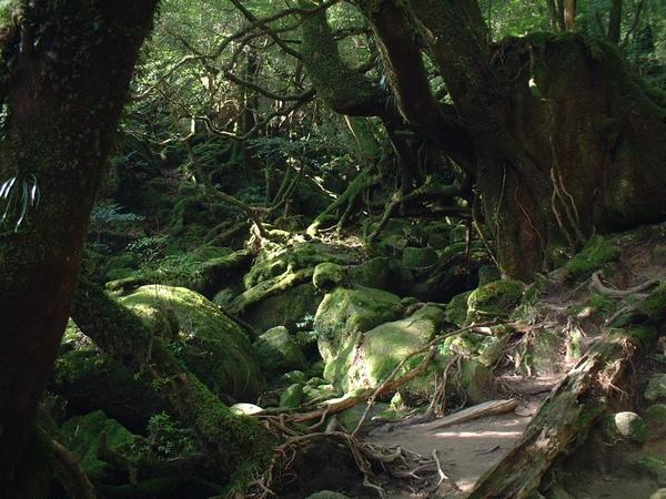 もののけ姫の森としても有名な白谷雲水峡
