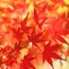 日本の世界遺産の紅葉